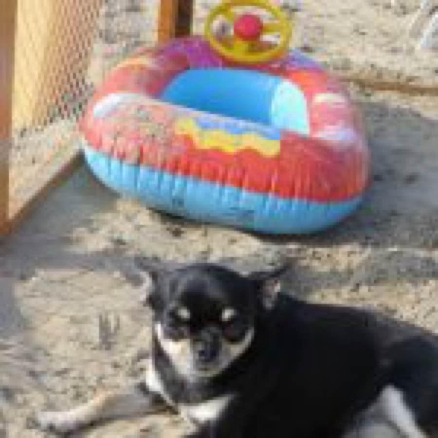 Spiaggia cani Riccione