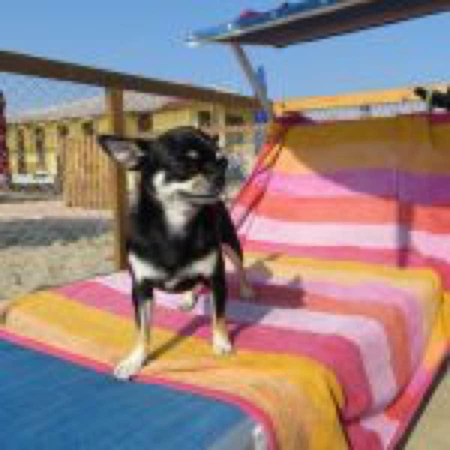 Spiaggia cani Rimini