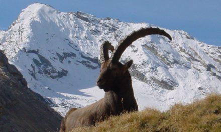 Tra i parchi e i castelli della Valle d'Aosta