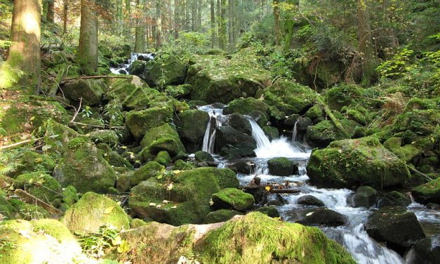Scopri il Baden-Württemberg
